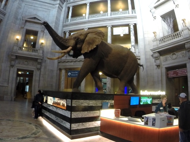 Smithsonian- Museum of Natural History